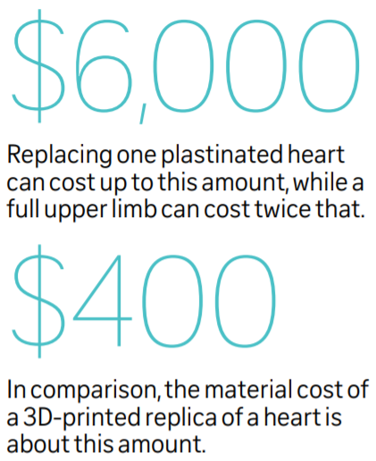 It costs up to $6,000 to replace a plastinated heart and $400 for a 3D printed replica of a heart.