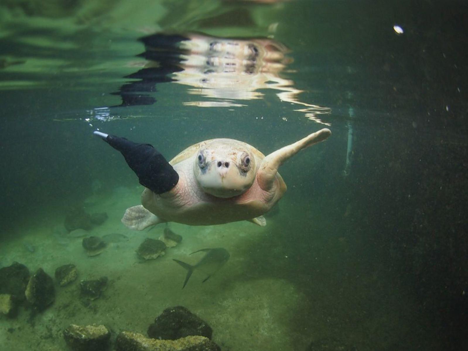 Photo: Key West Aquarium.